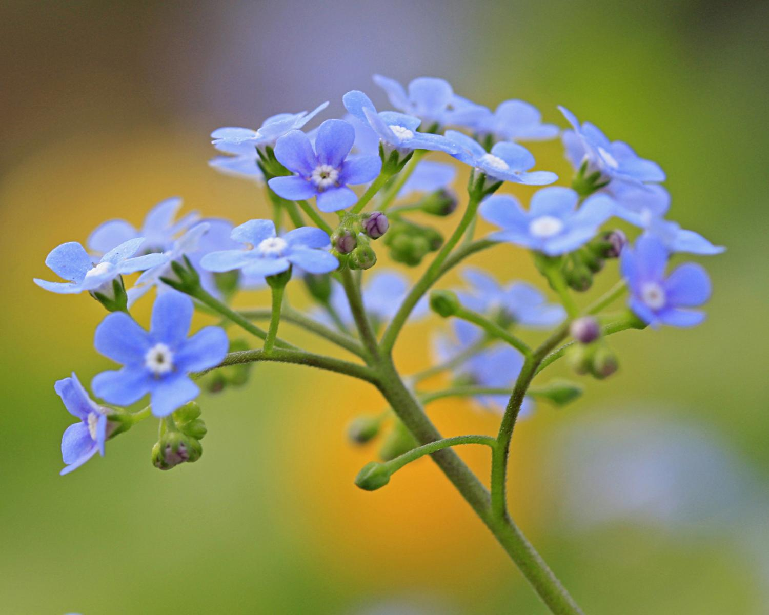 Skeiescapes Flowers Blue Flowers Skeiescapes Galleries