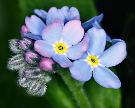 Skeiescapes flowers blue flowers skeiescapes galleries blue flowers orange flowers pink flowers purple flowers red flowers white flowers yellow flowers mightylinksfo