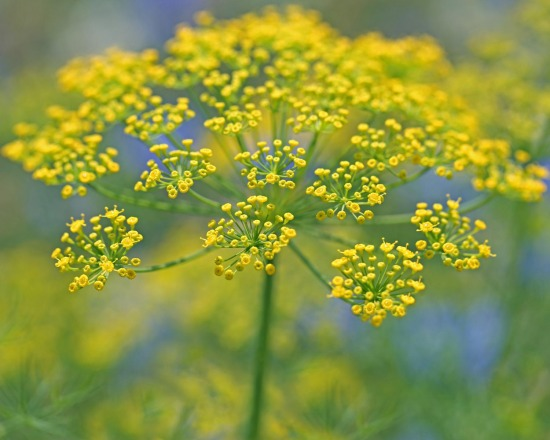 SkeieScapes | Flowers | Yellow Flowers | SkeieScapes Galleries