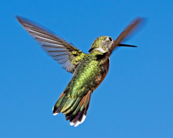 Stalking Hummingbirds